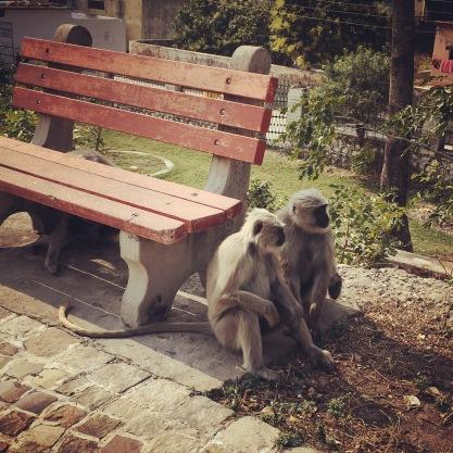 rishikesh-img_5256