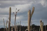 trees-img_7400