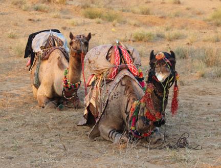 FB 17 Camel IMG_4063